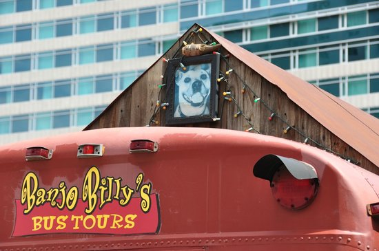 Banjo Billy's Bus Tours: that is Daisy.  The bus is named after her.