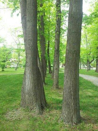 Gellatly Nut Farm : Nut trees