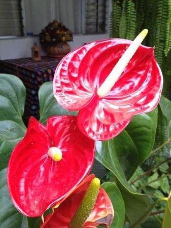 Posada La Merced Antigua: flower