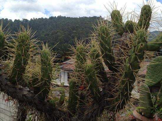 Posada La Merced Antigua: cacti on rooftop acting as a barrier for fall prevention of tourists getting too close to edges!