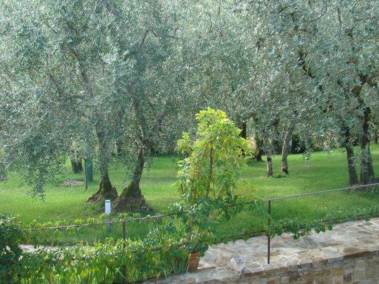 La Compagnia del Chianti: Olives