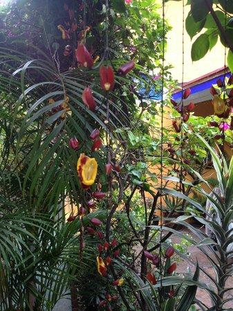 Casa de la Vida: Flowers where the hummingbirds feed