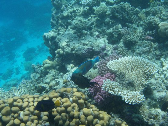 RedSeaZone : Beautiful corals and fishes