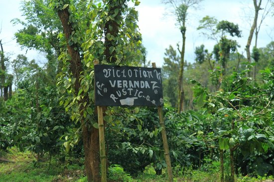 VV's charming sign