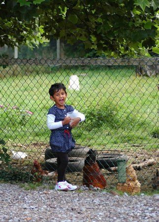 Applecroft House: Feeding hens