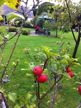 Applecroft House: Apples