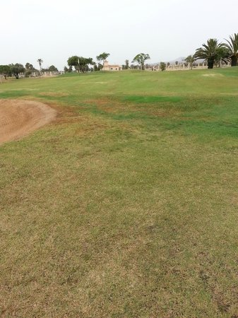 Fuerteventura Golf Club: non carpet like greens and approach