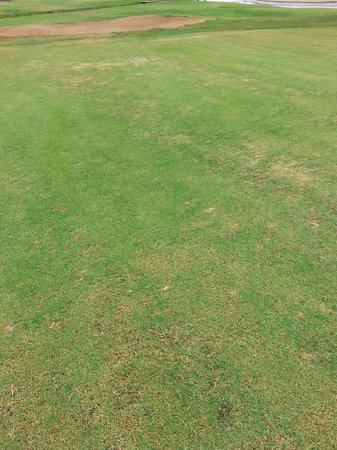 Fuerteventura Golf Club: another patchy green