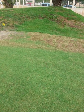 Fuerteventura Golf Club: example of poor greens