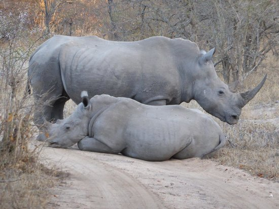 Thornybush Game Lodge: You just never know what is around the next corner!