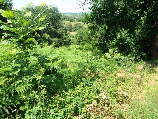 Tarn-et-Garonne, Francja: Overgrown gardens