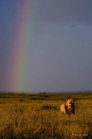 Entim Camp: Maasai rainbow