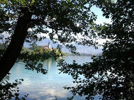 Camp Bled: Vista su lago 1