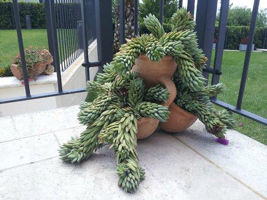 Giara con piante grasse foto di la tana dei leoni b b for Tutte le piante grasse