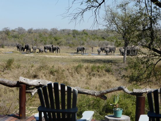 Simbambili Game Lodge: View of ellies at the lodge waterhole as we arrived at the lodge