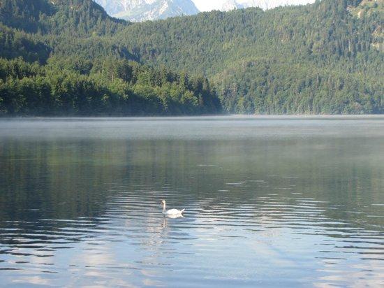 Alpsee: lago con cigno