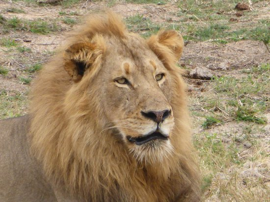 Simbambili Game Lodge: A very handsome boy