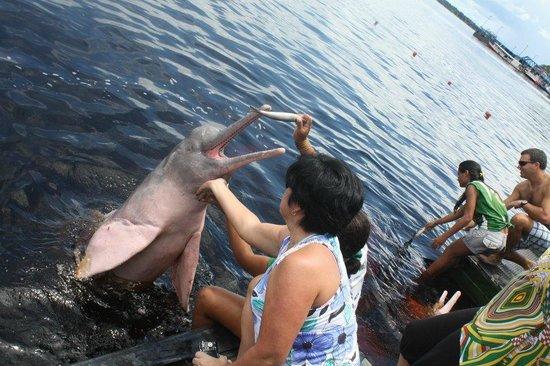 Manaus Dolphin Feeding