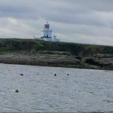 Puffin Cruises: Grey seals at Coquet Island