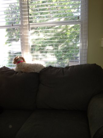 Park Place Suites: Sophie's favorite way to watch Island happenings