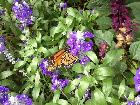 The Original Mackinac Island Butterfly House & Insect World: Just one of the hundreds of butterflies
