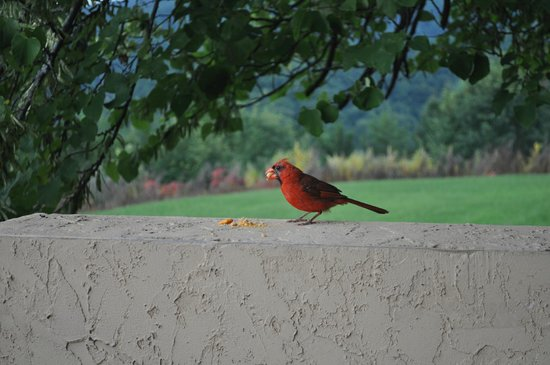 The Highlands Condominium : Our visitor each  morning...would eat from your hand
