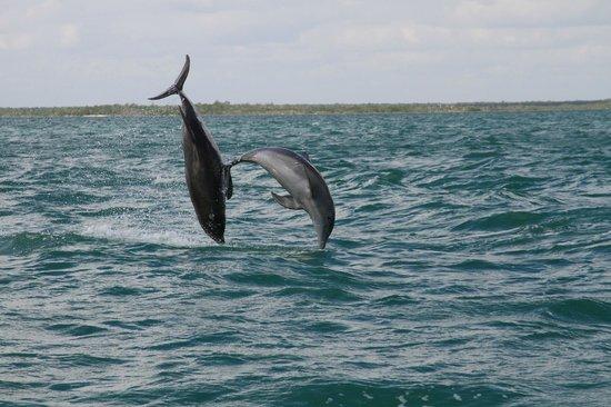 Sian Ka'an, Meksika: Delfini selvaggi