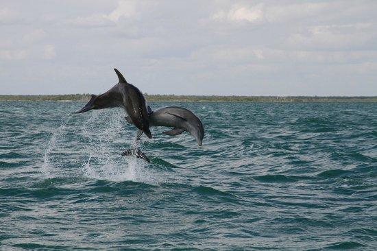 Sian Ka'an Biosphere Reserve: Delfini selvaggi... che spettacolo!!!!!!!