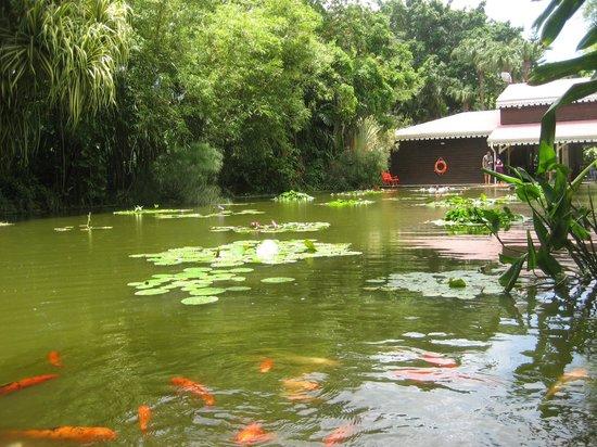 Le petit tang avec les poissons nourrir picture of for Jardin botanique guadeloupe