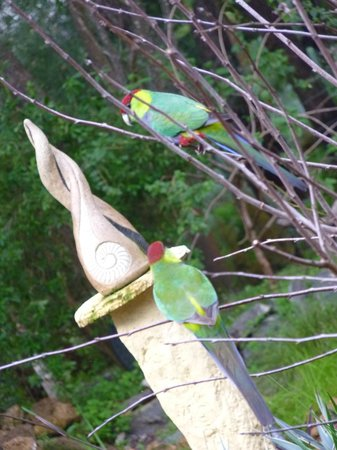 Little Shangri-La B & B : Beautiful birds and sculpture in the garden outside my room.