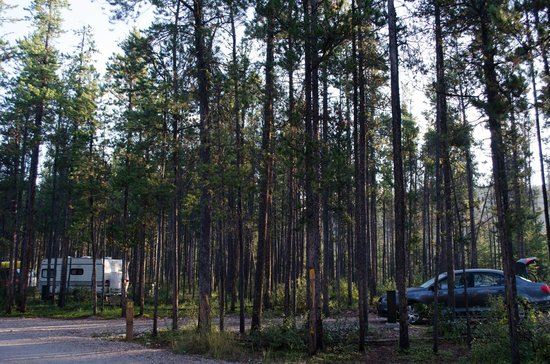 Wapiti Campground: Lots of space between sites