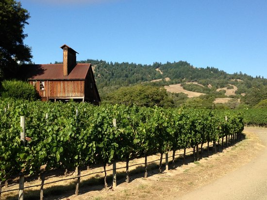 Goldeneye Winery : A view from the vineyard