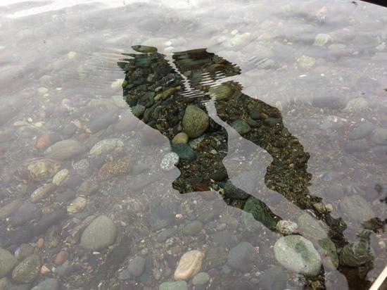 Crystal Seas Kayaking - Day Tours: oars reflecting
