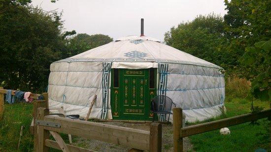 Cae Wennol Yurts: Celynnin yurt