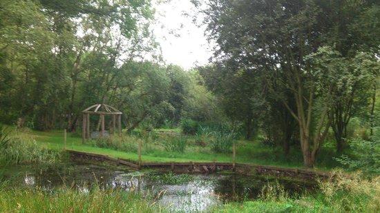 Cae Wennol Yurts: Ponds area