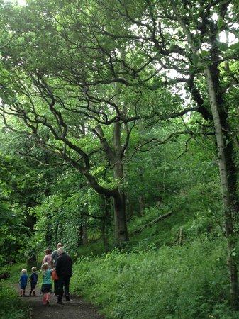 Brockholes Nature Reserve: Forest walk