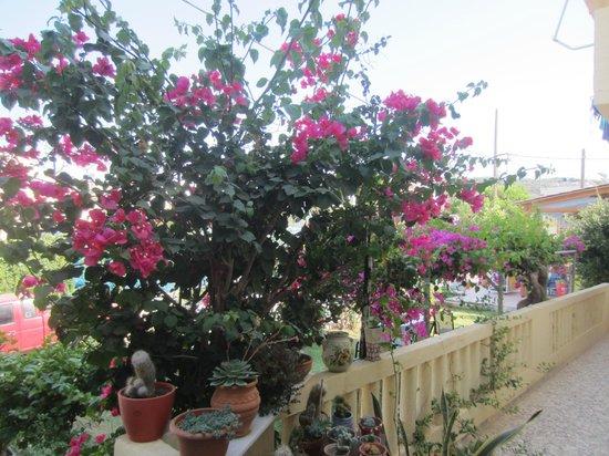 Raisakis Apartments : Il giardino 2