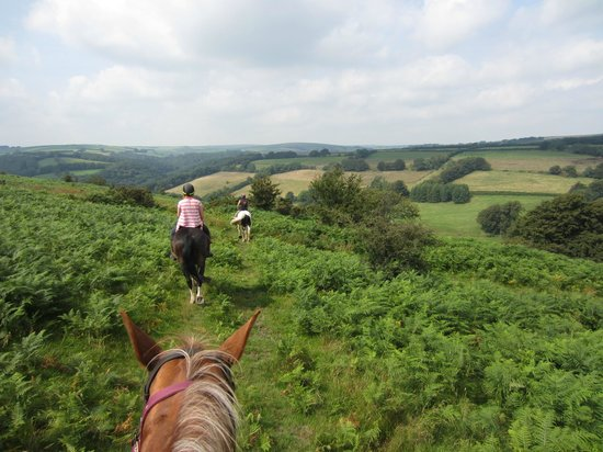 Pine Lodge Riding Holidays: Riding on the moors