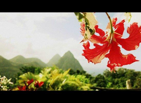 Crystals St Lucia: La vue du patio de Papaya
