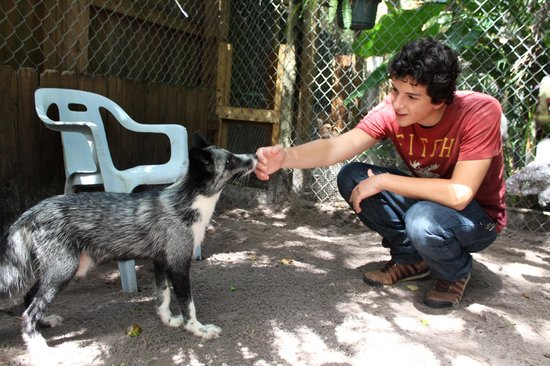 Shy Wolf Sanctuary Education & Experience Center: Meeting the fox
