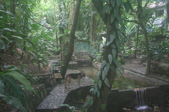 Villas Pico Bonito: Path by a creek