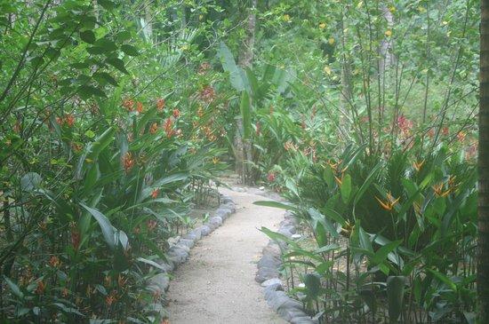Villas Pico Bonito: Flower trail
