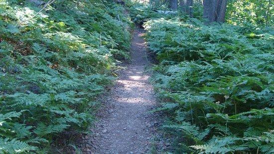 Plumas-Eureka State Park: shady trails