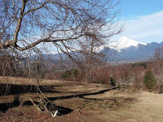 Mirador los Volcanes Lodge & Boutique: Vista da propriedade proximo a cabana.