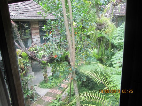 Fern Paradise: The view from our cabin