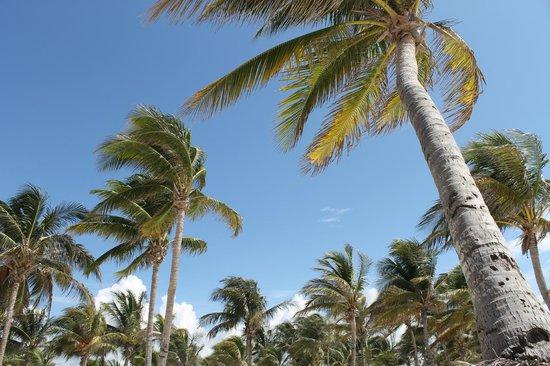 Barcelo Maya Colonial: Palmeto