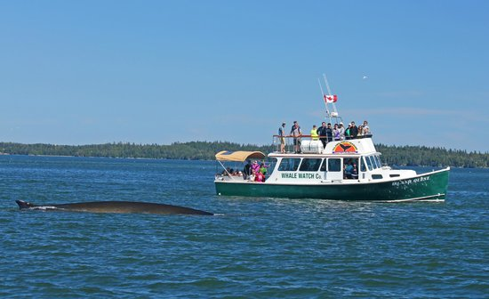 Island Quest Marine : Island Quest watching Fin whales!