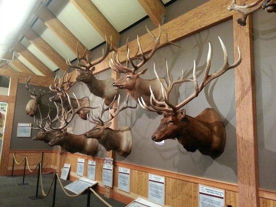 Wingate by Wyndham Missoula Airport: Elk Foundation