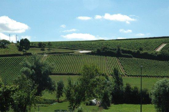 Paris Wine Day Tours : Vines