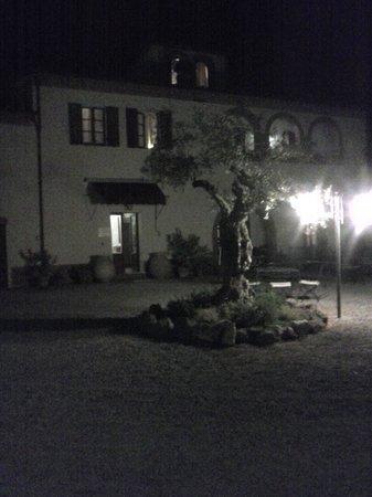 La Bandita Hotel Siena: Il grande ulivo